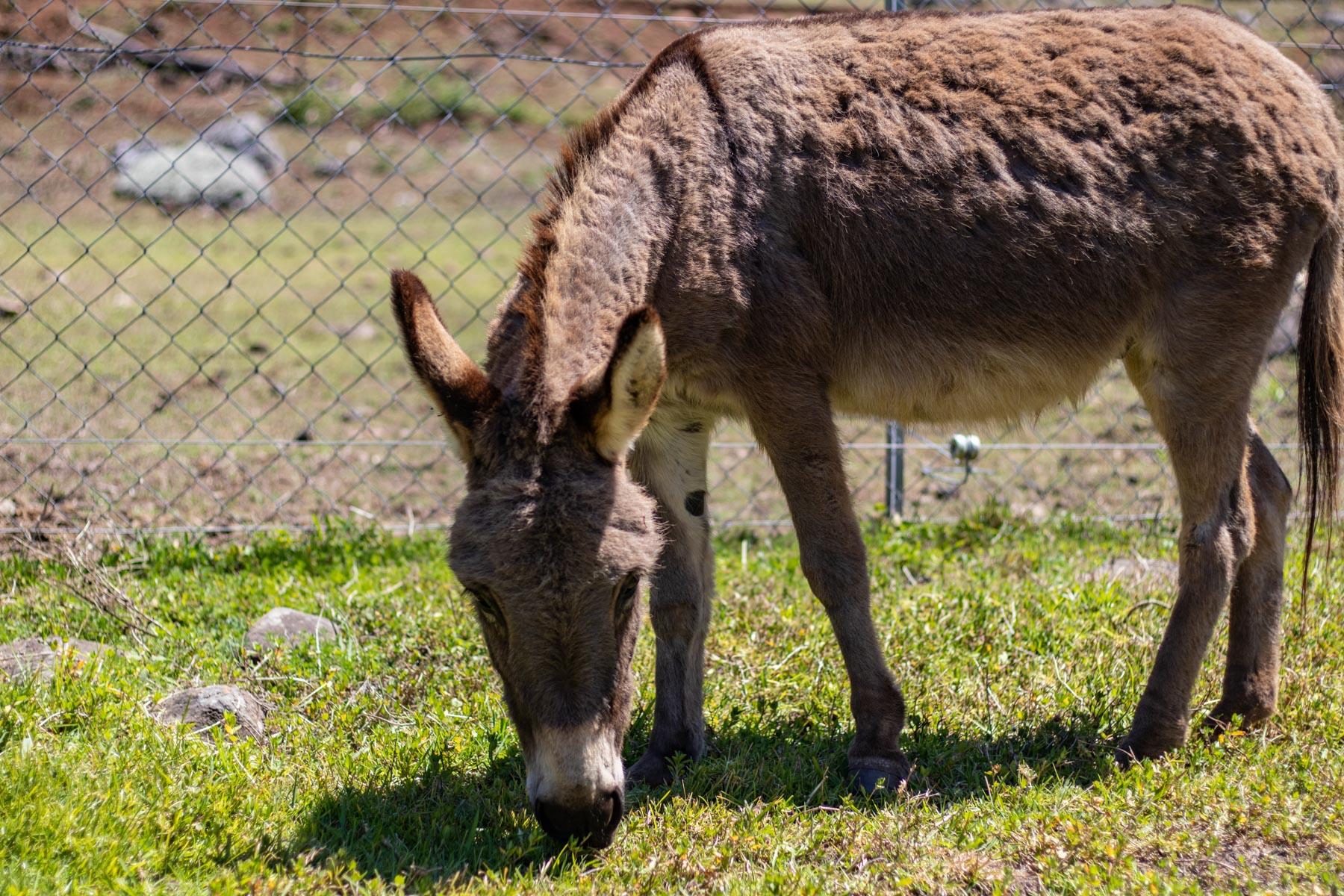 Mystery Mountain Farm Stay   Donkey
