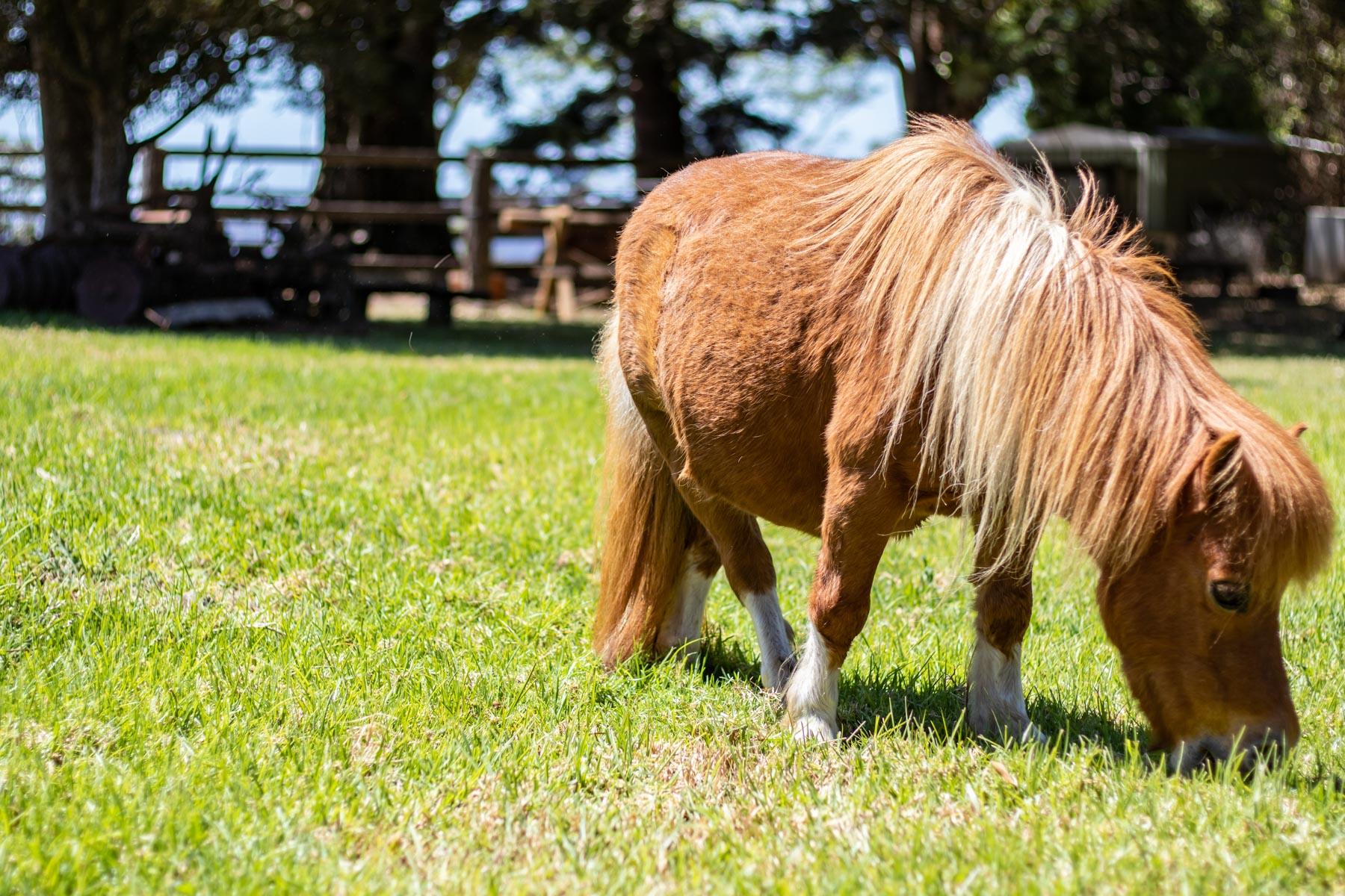 Mystery Mountain Farm Stay   Horse